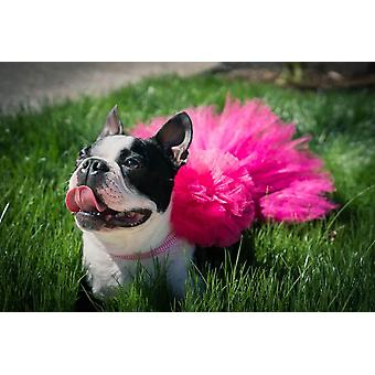 Hot Pink Dog Tutu sukně | Xs-xxxl