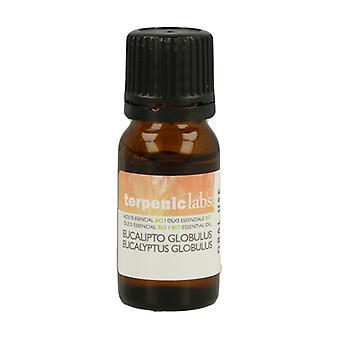 Eucaliptus Globulus Essential Oil 10 ml of essential oil