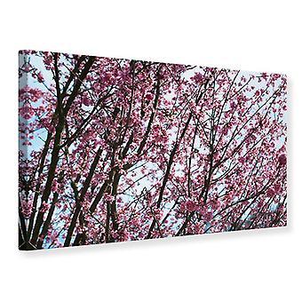 Canvas Print Japanse kersenbloesem