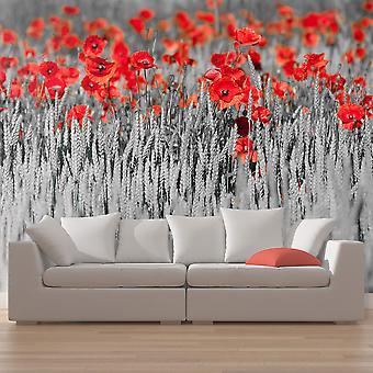 Fotobehang - Rode papavers op zwarte en witte achtergrond