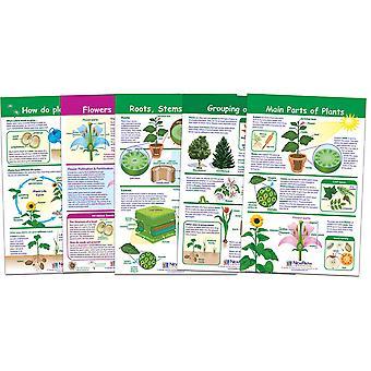 Tutto sui grafici delle bacheche delle piante, set di 5