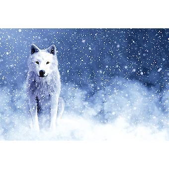 Majestoso Lobo Branco
