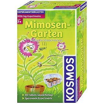 Kosmos 657031 Mitbring-Experimente Mimosen-Garten Science kit 7 år og derover