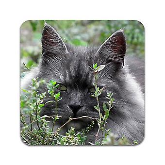 2 ST Siberian Cat Coasters