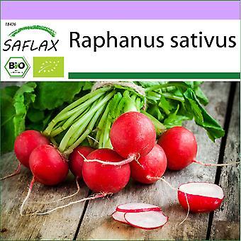Saflax - 100 zaden - Biologisch - Radijs - Kersenklok - BIO - Radis - Kersenklok - BIO - Ravanello - Cherry Bell - Ecológico - Rábano - Cherry Bell - BIO - Radieschen - Cherry Bell