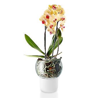 Assolo di Eva orchidea vaso bewaessernd auto vetro smerigliato D 13 cm