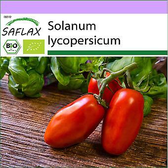 Saflax - 15 graines - Bio - Tomate - San Marzano - BIO - Tomate - San Marzano - BIO - Pomodoro - San Marzano - Ecol'oco - Tomate - San Marzano - BIO - Tomate - San Marzano - San Marzano