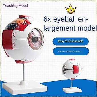 Eye Anatomical Model