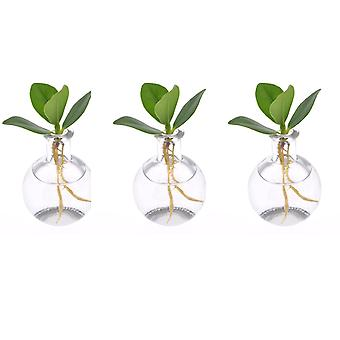 Indoor trees from Botanicly – 3 × Autograph tree in Samo glas – Height: 8 cm – Clusia