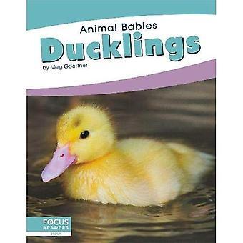 Animal Babies: Ducklings