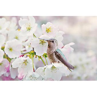 Tapete Mural Cherra Blossoms I