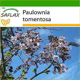 Saflax - 200 graines - avec sol - Princess Tree - Arbre impérial - Albero della principessa - Paulonia - Blauglockenbaum