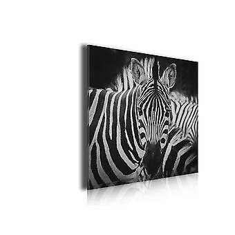 Tableau les zèbres, 50x50cm
