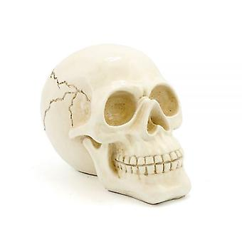 18Cm Exotic Cream Cracked Skull Ornament Home Decoration