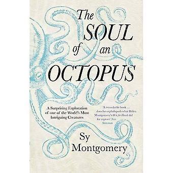 Die Seele eines Tintenfischs: eine überraschende Erkundung in das Wunder des Bewusstseins