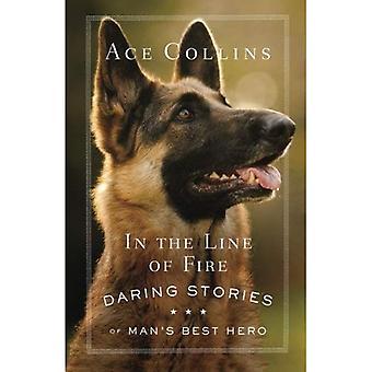 In the Line of Fire: Daring verhalen van Man's beste held