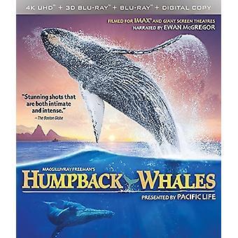Humpback Whales [Blu-ray] USA import