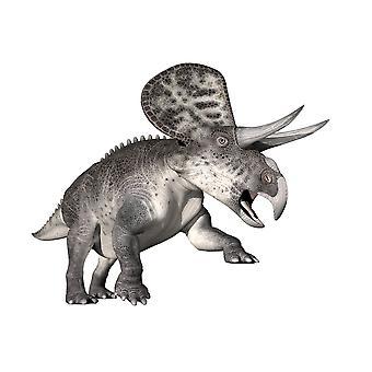 Zuniceratops Dinosaurier weißen Hintergrund Poster Print