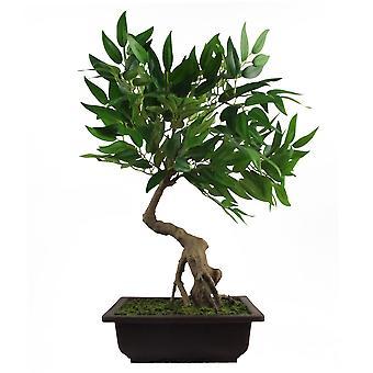 50cm Artificial Ruscus Acacia Bonsai Tree