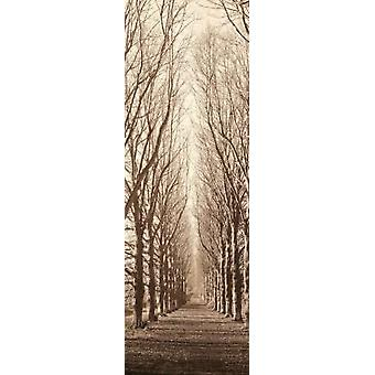 Poplar Trees Poster Print by Alan Blaustein