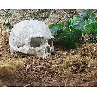 Easter Island Head Bone Skull
