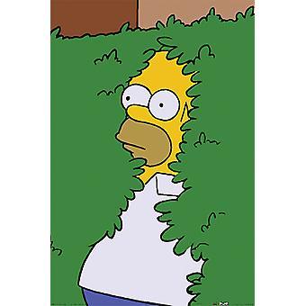 Poster - Studio B - The Simpsons - Homer Bush 24