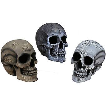 Human Skull Light Up Small White
