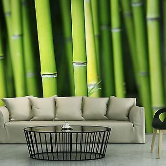 Tapet - Bambus