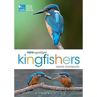 RSPB Spotlight ijsvogels door David Chandler