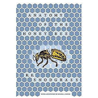 Anatomi av honungsbiet (Comstock bok)