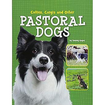 Collies und Corgis anderen pastoralen Hunde (Edge-Bücher: Hund Dateien)