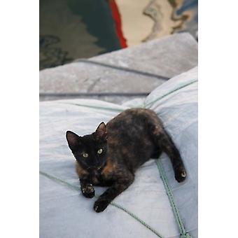 ボートに乗ってギリシャ パロスのナウサ猫 Jaynes ギャラリーでのポスター印刷を帆します。