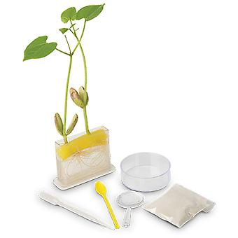 Kit de estudio de ciencia Sra. verde raíz