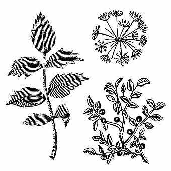 Natural Rubber Stamp Herbarium (WTKCC150)