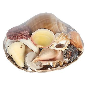 Something Different Fruits of the Sea Shell Basket