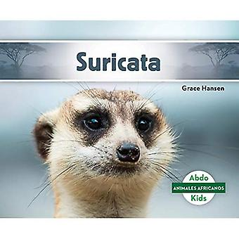 Suricata / Suricata (Animales Africanos / africanas animales)