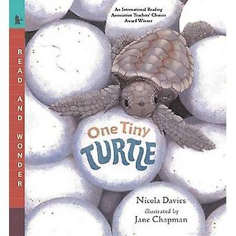 One Tiny Turtle by Nicola Davies - Jane Chapman - 9780763623111 Book