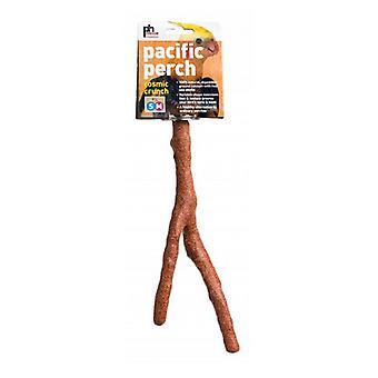 """Prevue Cosmic Crunch Perch - Medium - 10"""" Long - (Small-Medium Birds)"""