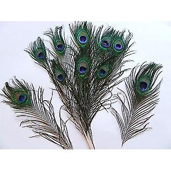 10 Small Peacock 30cm Feathers for Crafts