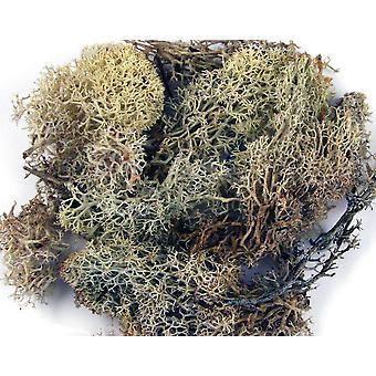 Sac naturel de mousse islandaise 100g pour l'artisanat de fleuriste