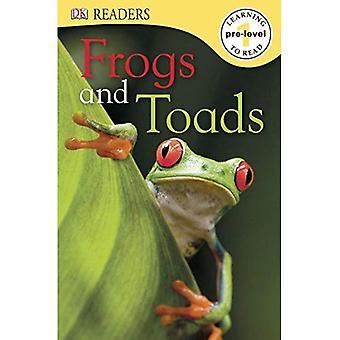 Żaby i ropuchy (DK czytelników: poziom Pre1)