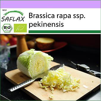 Saflax - 40 frø - Organisk - Kinesisk kål - Granat - BIO - Chou chinois - Granat - BIO - Cavolo cinese - Granat - Ecológico - Repollo Chino - Granate - BIO - Chinakohl - Granat