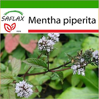 Saflax - 300 seeds - With soil - Peppermint - Menthe poivrée - Menta piperita - Menta - Pfefferminze