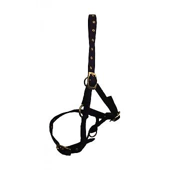 Hy Foal Head Collar