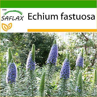 Saflax - 100 Samen - mit Boden - stolz von Madeira - Vipérine de Madère - Orgoglio di Madeira - Tajinaste Azul - Blauer - Natternkopf