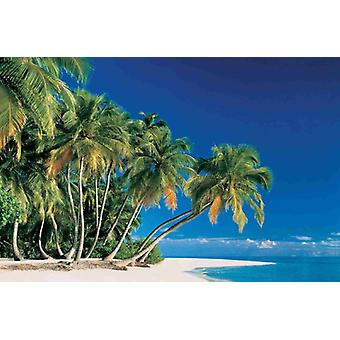 Tapete Wandbild Tropical Palms