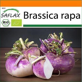 Saflax - Giardino nella Borsa - 600 semi - Biologico - Rapa - Milano Viola - BIO - Chou-rave - Violet de Vienne - BIO - Cavolo rapa - Milano Viola - Ecológico - Colirrábano - Púrpura de Milán - BIO - Kohlrabi - Milano Viola