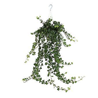 Hedera helix - klimop - hangplant - Hoogte 60 cm - Diameter pot 17 cm