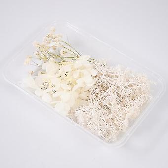 Todelliset kuivat kukka kuivat kasvit aromaterapiaan, kaulakoru korujen tekeminen