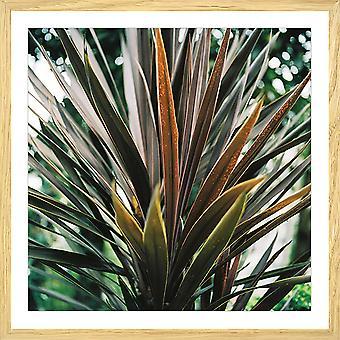 De bloemaffiche en het regenwoud van Yucca